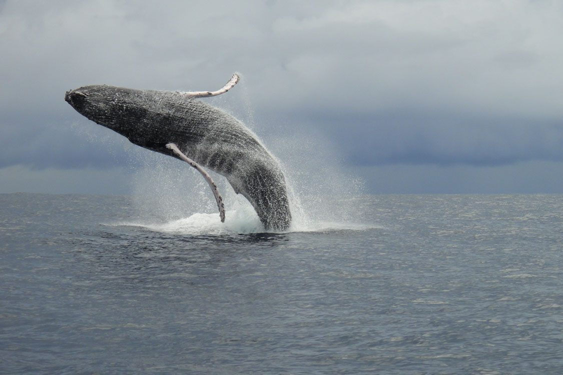 Whale watching during your Costa Rica adventure vacation