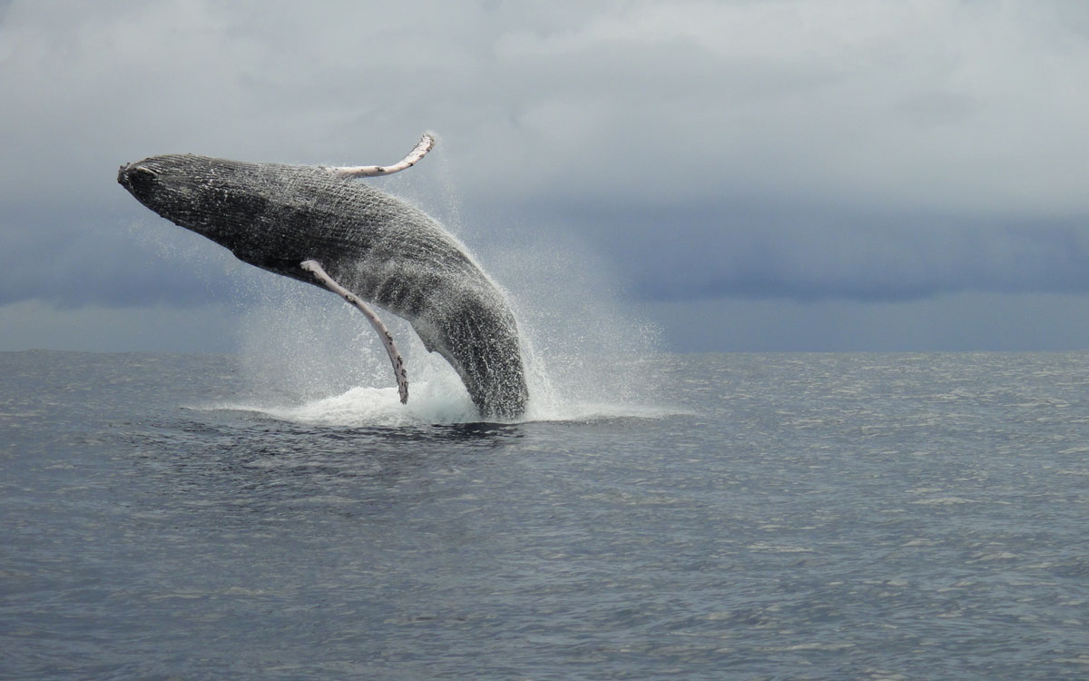 Whale watching during your Costa Rica adventure vacation.