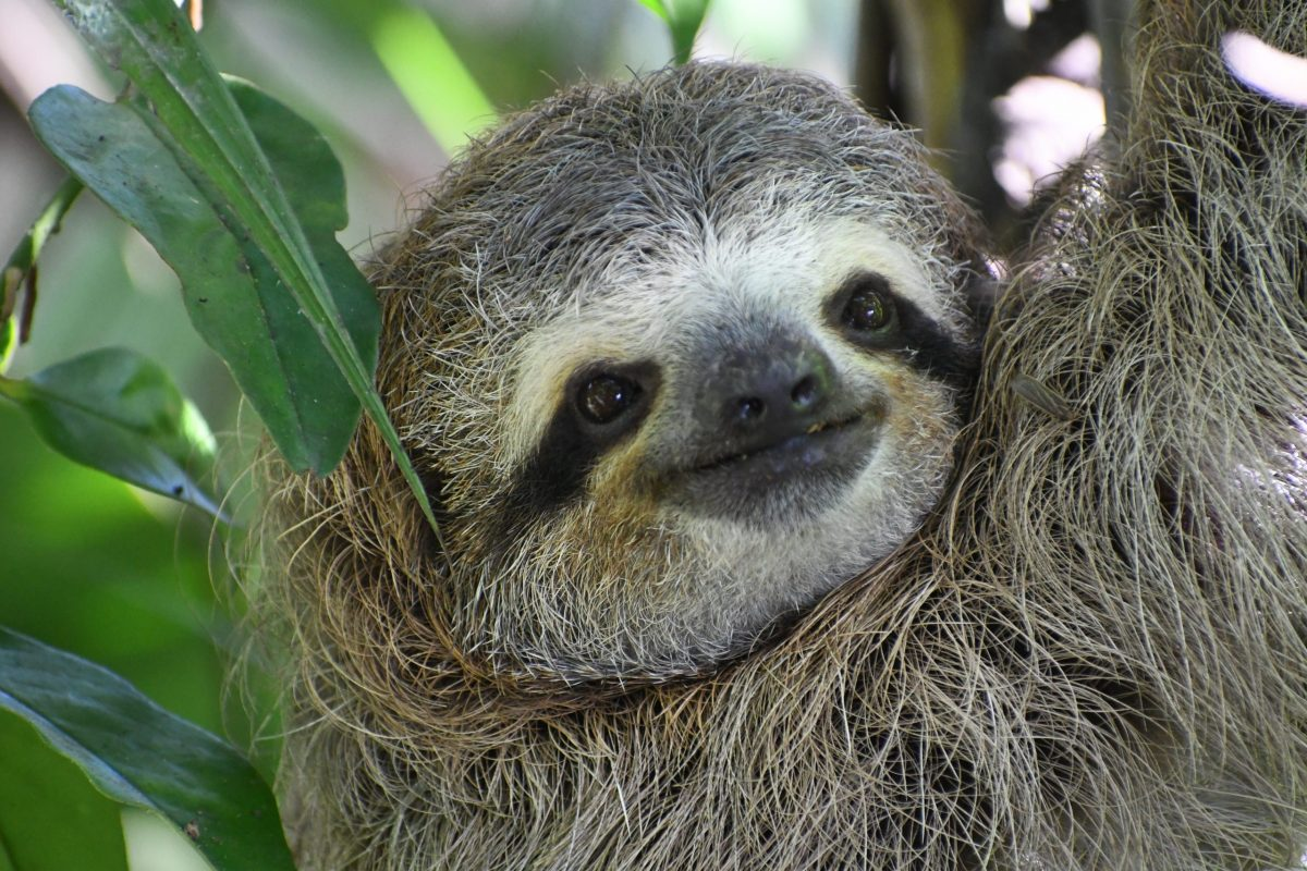Linda the Sloth