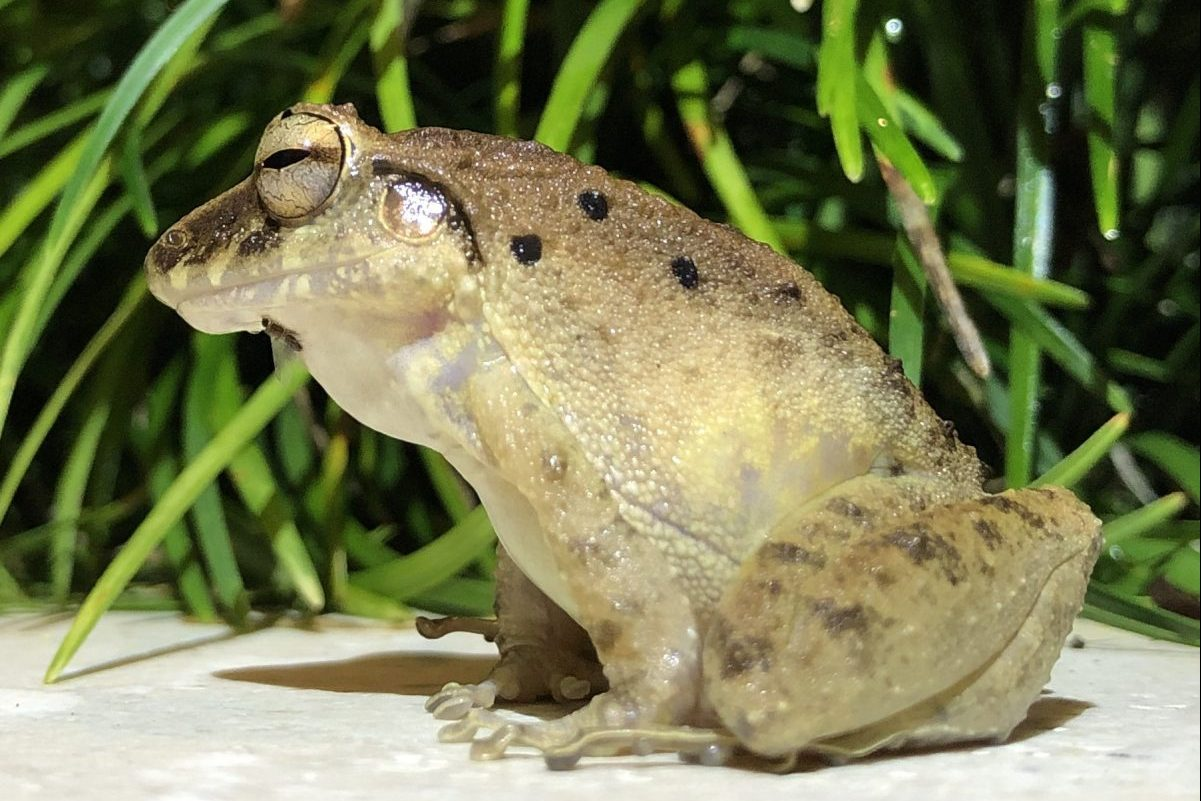 Rainforest Frog